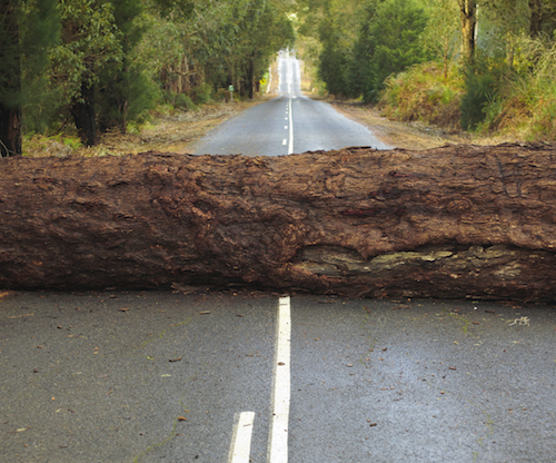 A large tree blocking the road after a storm in Western Australia.